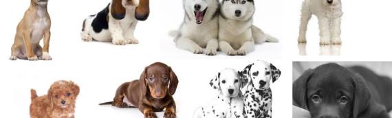 Cani da compagnia … scegli il tuo cucciolo
