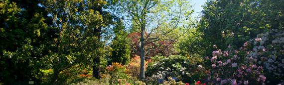 Cosa fare in Giardino nel Mese di Ottobre