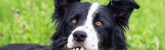 Un Cane sano è un Cane più felice: to do List per la Salute del Cane