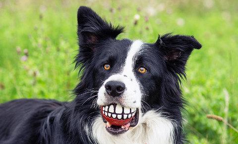 salute-del-cane