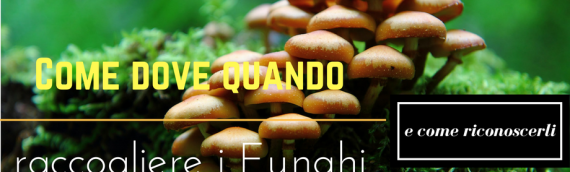 Come dove quando raccogliere i Funghi e come riconoscerli