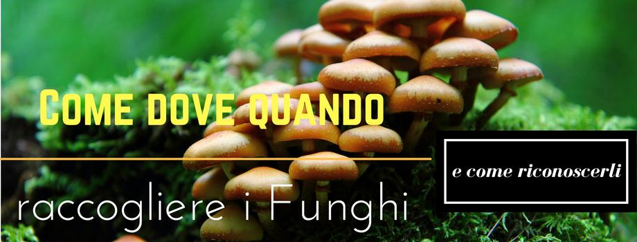 come dove e quando raccogliere i funghi